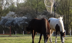 Stajnia Equus w Żabieńcu