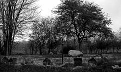 """Cmentarz wojenny """"Marynin"""""""